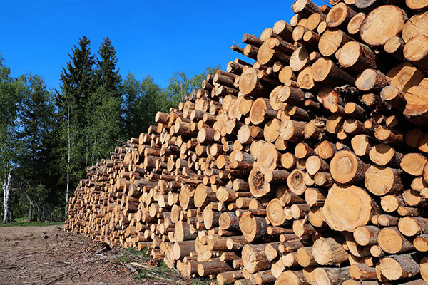 NJ selective timber harvest for sustainable and local forest products