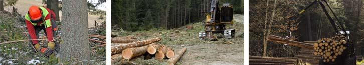 Nj woodland management plans forestry woodlot stewardship tree-farm Heartwood NJ New Jersey